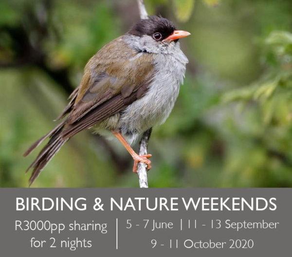 Birding & Nature Weekends
