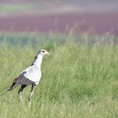 Birding September 2019