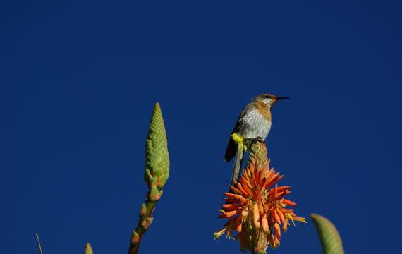 cavern-birding-1