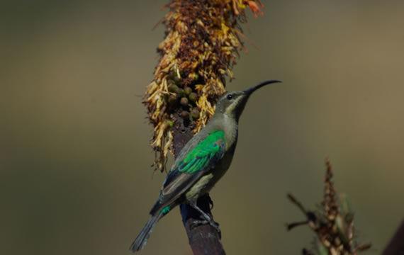 cavern-birding-4