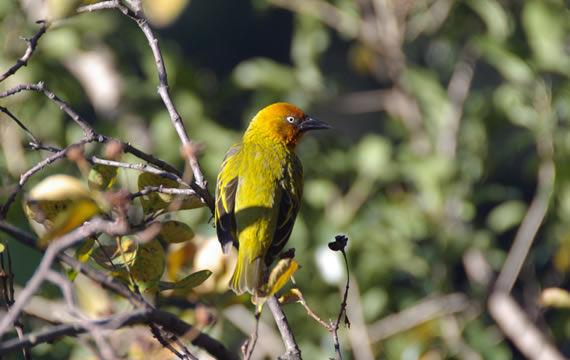 cavern-birding-6