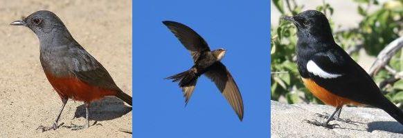 dec16-birds-2