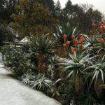 intro-snow-2