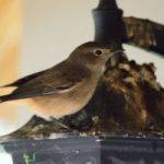 oct15-birding-2