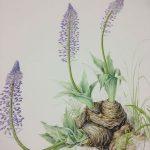 oct15-botanicalart-2